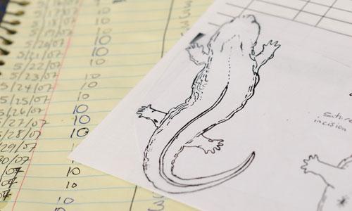 2011_hellbenders_discover_image2.jpg