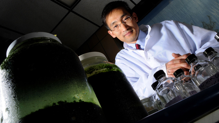 Paul Nam growing Algae for research.jpg